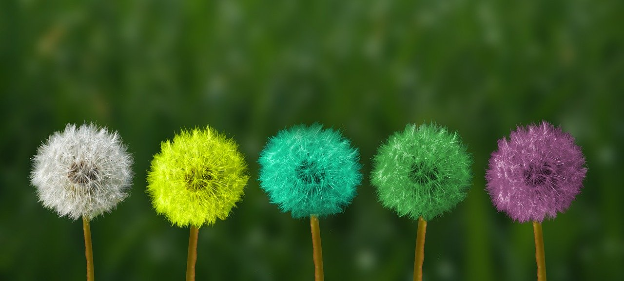 dandelion, colorful, people of color