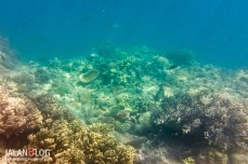 Riung Underwater