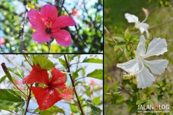 Flores = Bunga