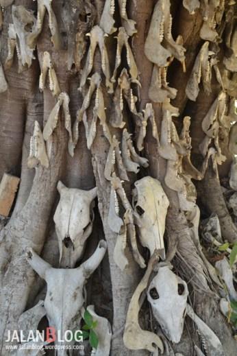 Pohon dengan ganungan berbagai macam tengkorank dan rahang
