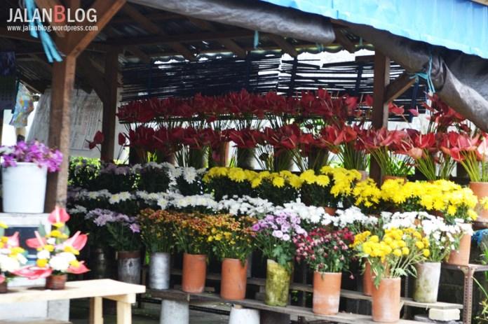 Toko yang menjual aneka bunga warna warni