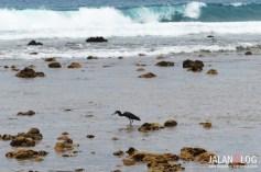 Burung laut lainnya...