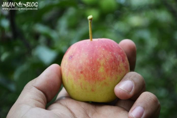 Apel kemerahan yang rasanya asam asam segar