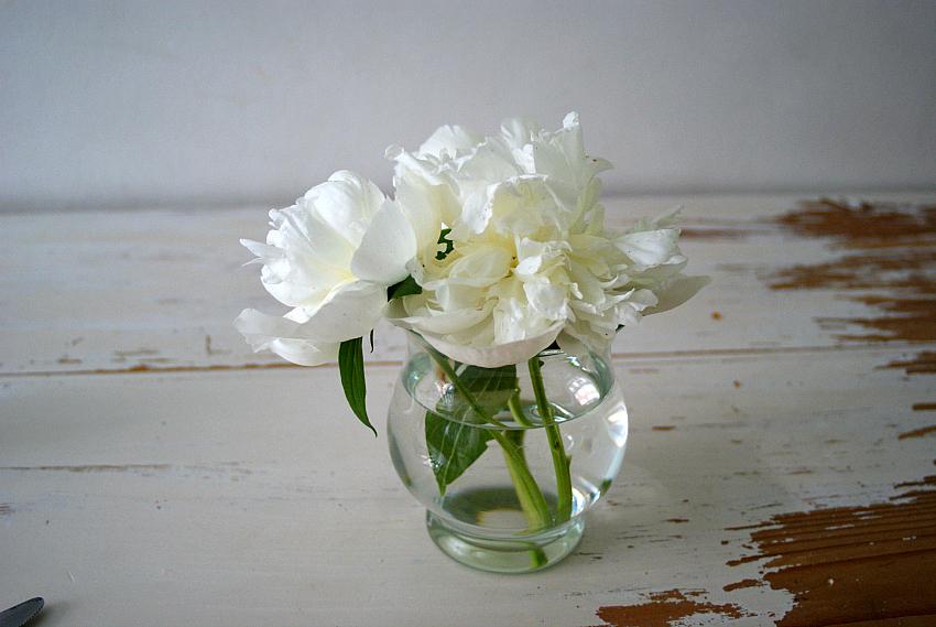 weiße Pfingstrosen in der Vase