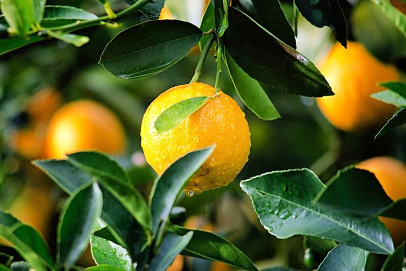 Alles wird sauber mit Zitrone