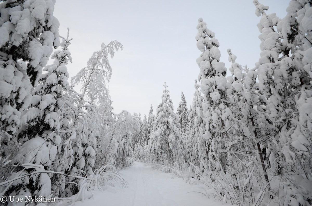 Lumista metsää matkalla Karhujärvelle, tammikuu 2019. Kuva: Upe Nykänen
