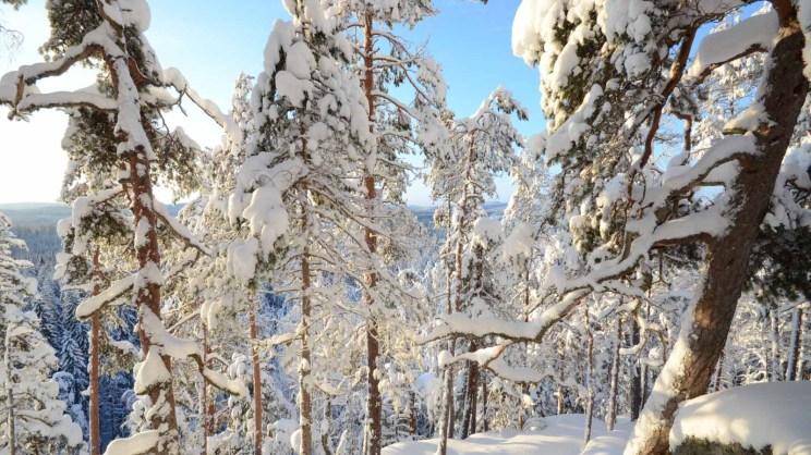 Haukkavuoren luminen maisema talvella. Kuva: Upe Nykänen