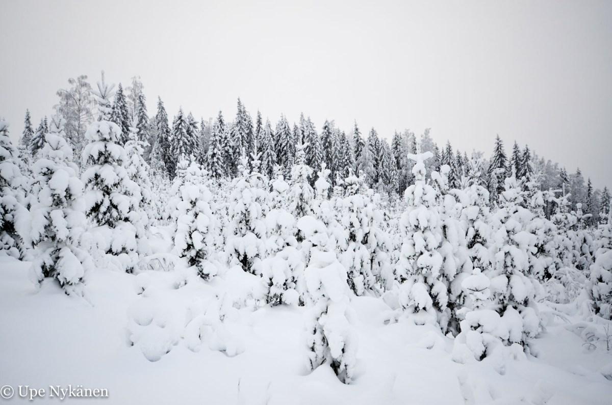 Talvinen maisema matkalla Karhuvuorelta Karhujärvelle. Kuva: Upe Nykänen