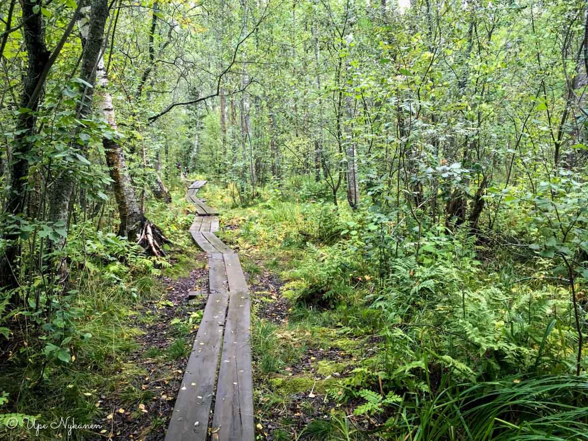 Pitkospuupolku Viitaniemessä, Jyväskylä