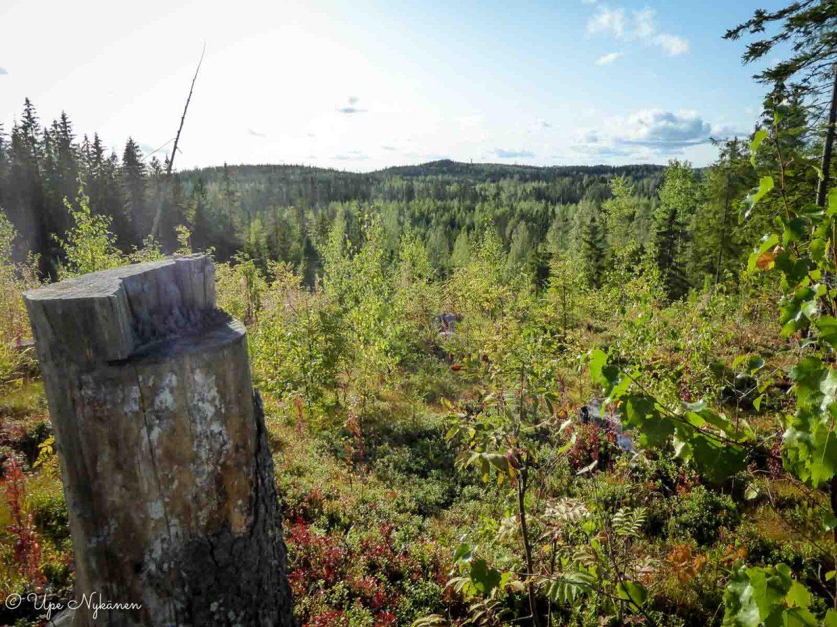 Melkein vaaramaisema polun varressa, Jämsä
