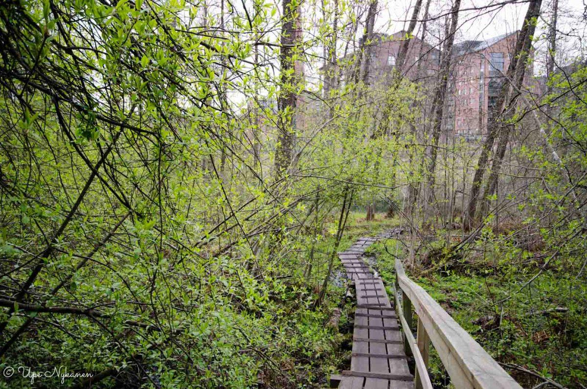 Tourujoen luontopolun pitkospuut laskeutuvat joelle, vastapäätä Kankaan kerrostalot.