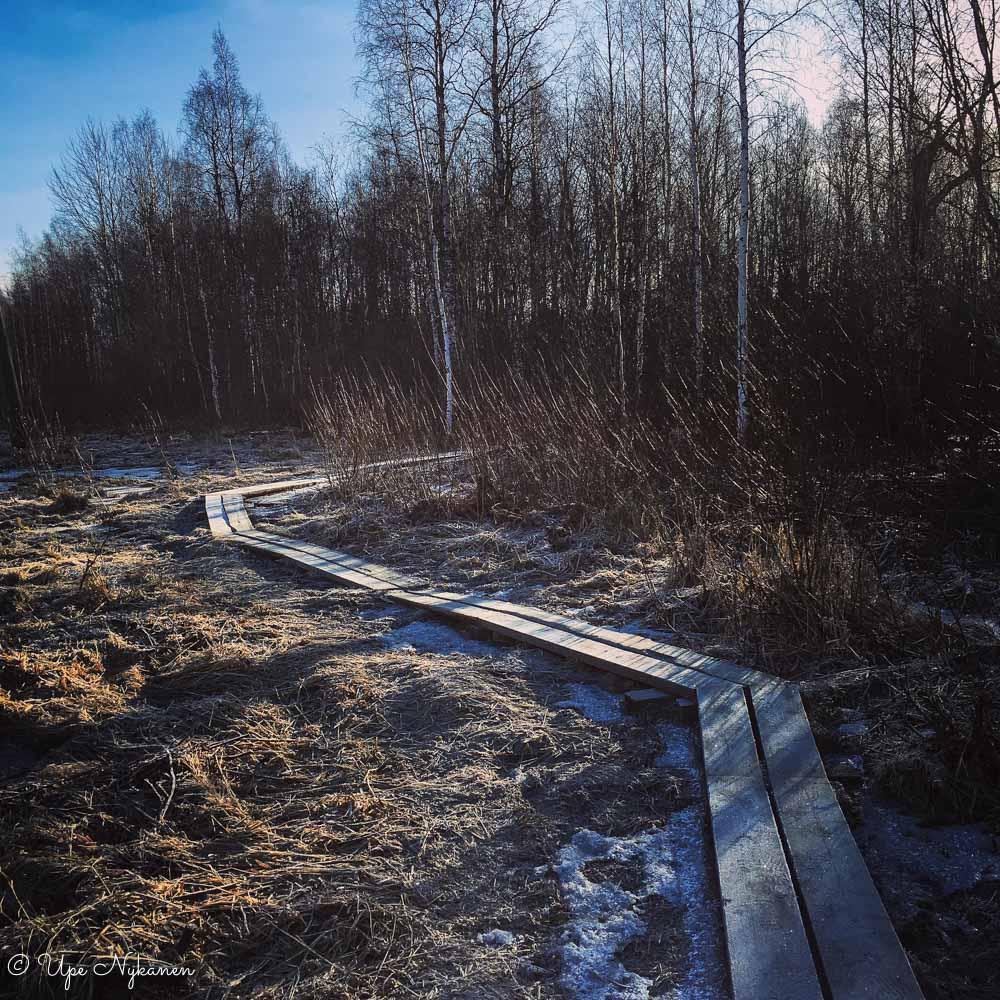 Viitaniemen pitkospuut, Jyväskylä.