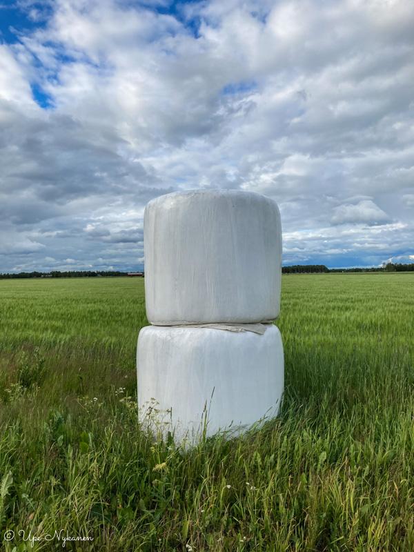 Kaksi valkoista tuorerehupaallia päällekkäin ovat kuin isoja vaahtokarkkeja keskellä peltoa.