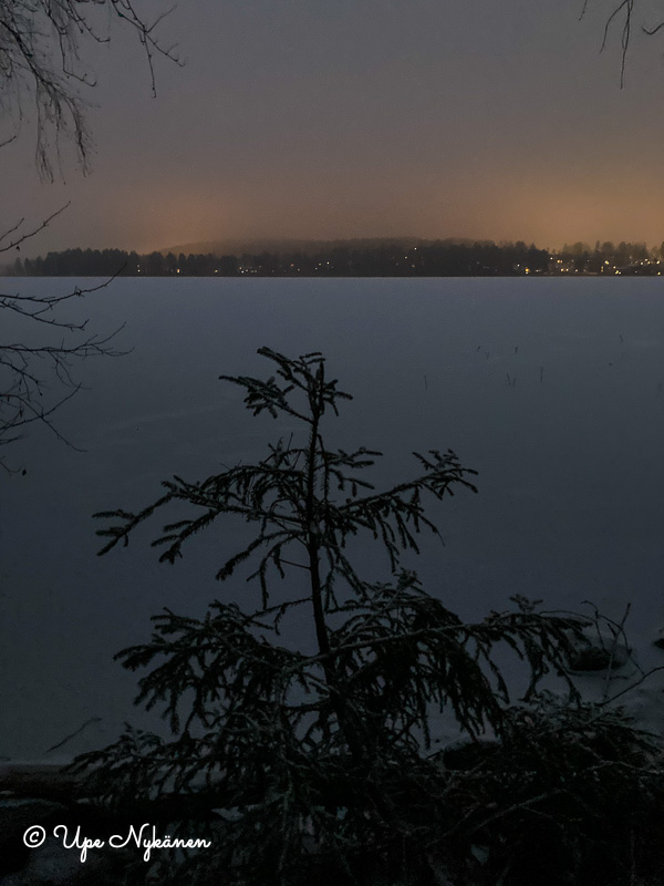 Pieni kuusi jäätyneen Tuomiojärven rannassa aamuhämärissä.