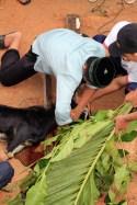Prosesi Penyembelihan hewan qurban by Ust. Muhammad Rofi'i