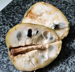 Custard Apple cut in two