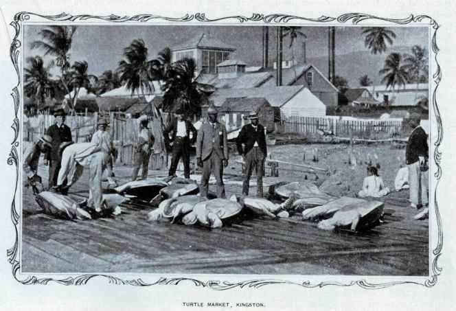 Turtle Market along Victoria Pier, Kingston, 1890s; turtles