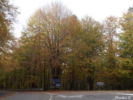 foliage in Sila