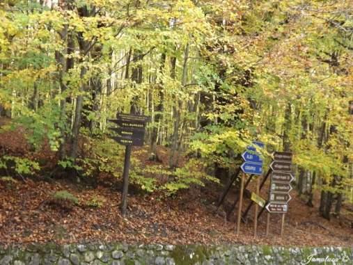 foliage in Sila