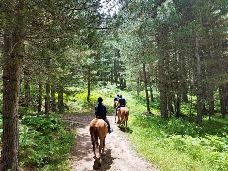 Attività outdoor in Sila - escursioni a cavallo