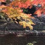 京都の紅葉 ほぼ最新状況