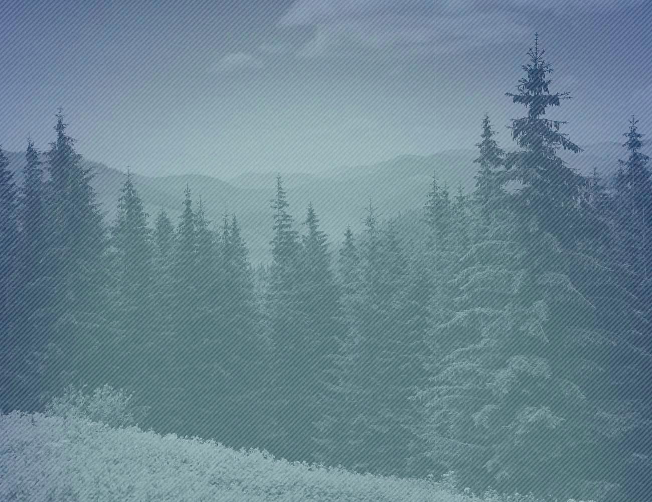 jamboree-background