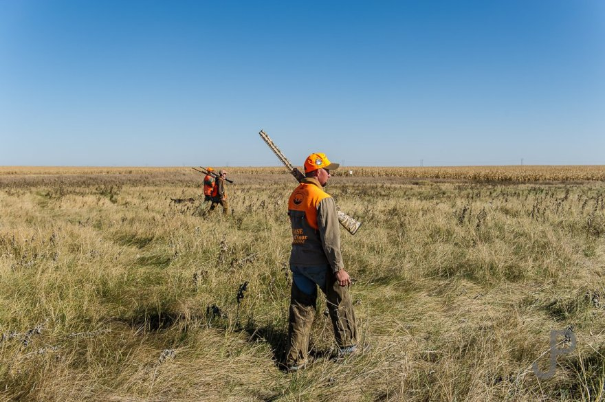 We fan out across CRP grass on our first day of pheasant hunting in South Dakota.