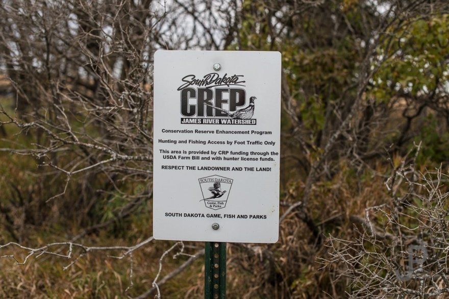 Much of the land we hunted was designated CREP and was funded through the federal CRP program.