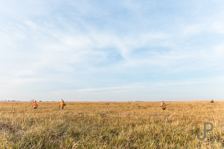 We fan out over the CRP grass as we chase a running bird across the prairie.