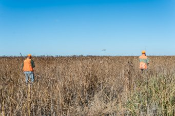Norm LIppert and Vance Fielder flush a bird far ahead while walking CRP land southwest of Aberdeen.
