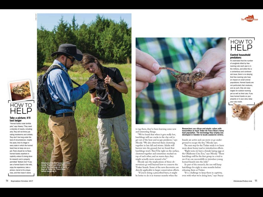 The Oklahoma City Zoo helps with tracking and raising Texas Horned Lizards in conjunction with people from Tinker AFB and several universities.