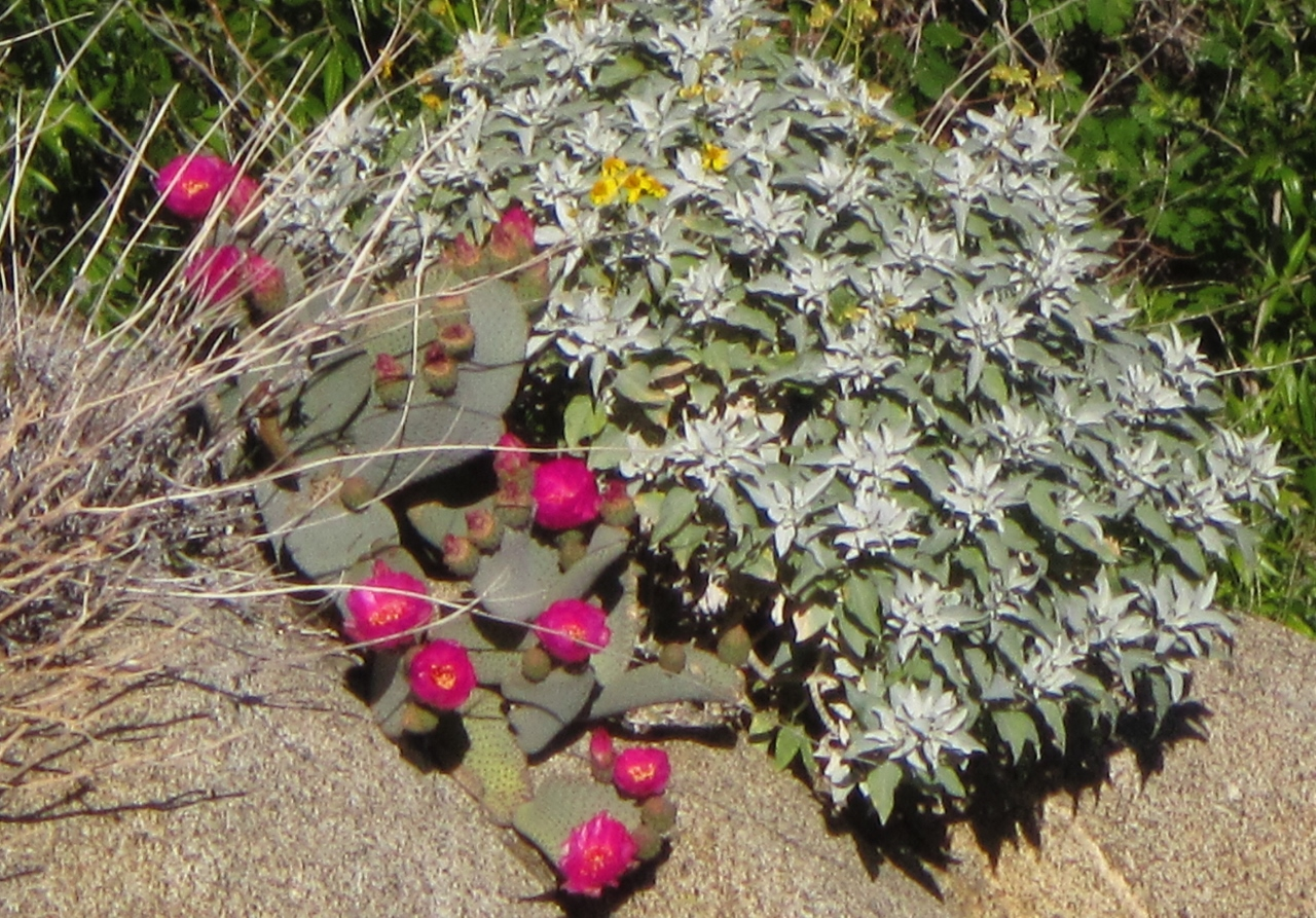 Mixed flowering plants along the creek