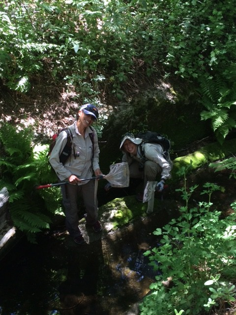 Reserchers checking on mountain yellow-legged frogs at James Reserve