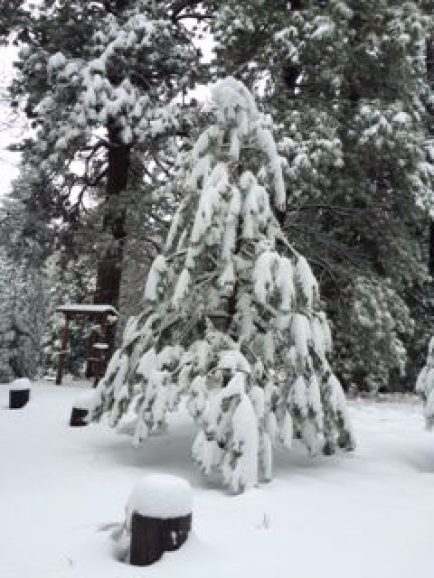 Winter snow covering trees at the James