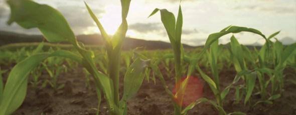 Soil Plant LinkedIn James Alexander Michie