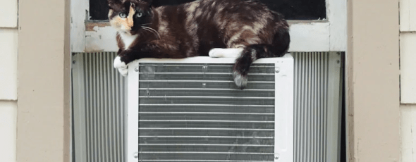 A cat sits on an air conditioning unit CBC News   James Alexander Michie