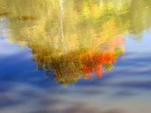 Autumn Abstract 1