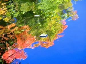 Autumn Abstract 5