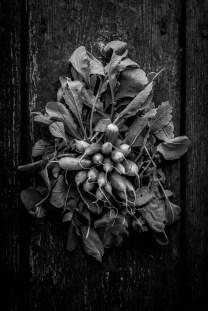 Fresh-Harvest-Series-12