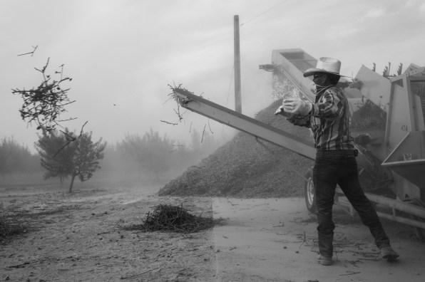 PR-Farms-Almond-Harvest-10
