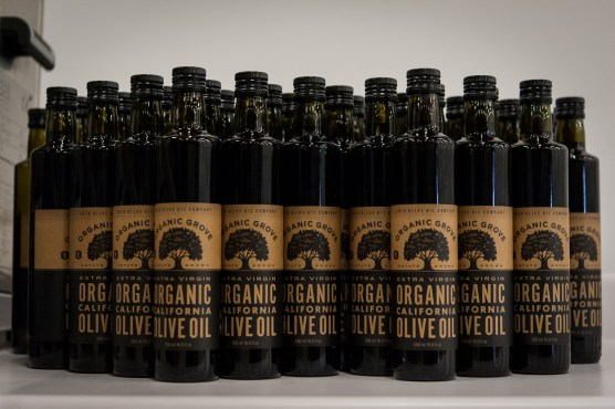 PR-Farms-Olive-Harvest-25