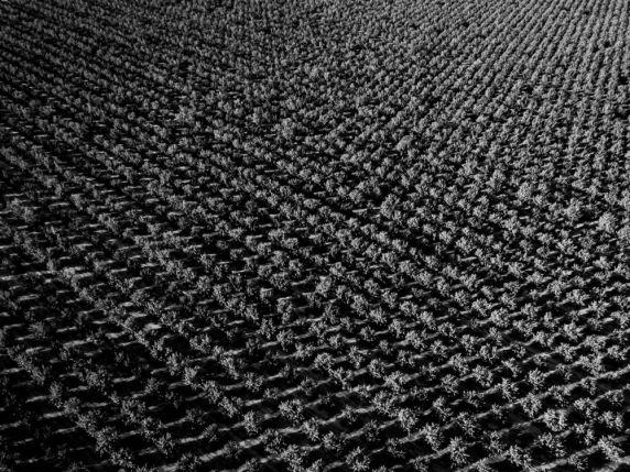Textiles-0005