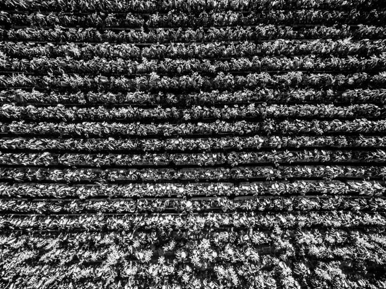 Textiles-Flowers-0549
