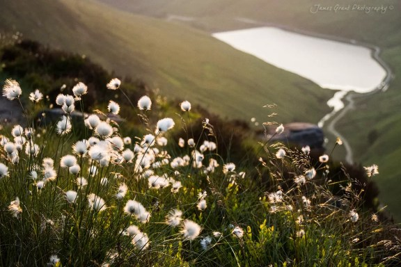 Cotton Grass and Greenfield Reservoir - Peak District Photography