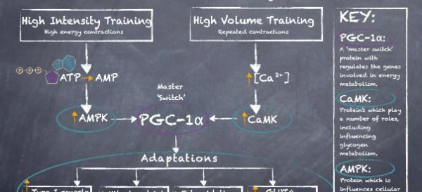 Protein Signalling Pathways