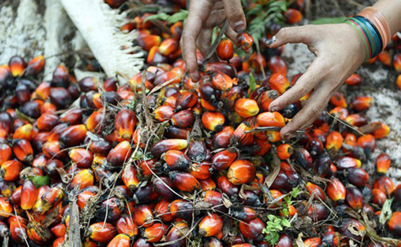 Malaysia launches 'Love MY Palm Oil' drive