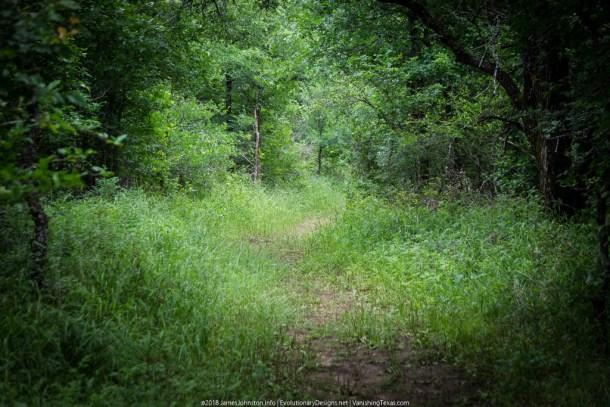 Crow Hill Trail