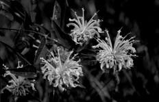 Flowers of Deer Run_7
