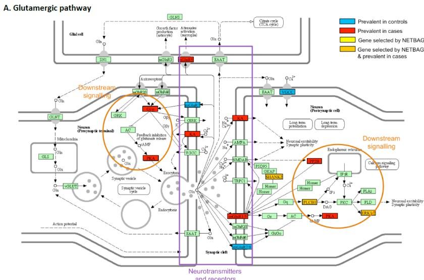 synapsepinto
