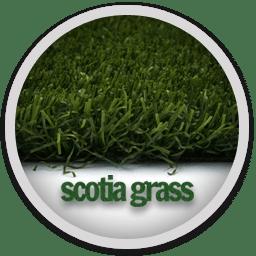 Scotia Grass